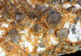"6.5"" Smoky Quartz Cluster Encrusted With Garnets - Wow! - #51036-2"
