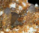 "6.5"" Smoky Quartz Cluster Encrusted With Garnets - Wow! - #51036-5"