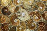 "12"" Plate Made Of Agatized Ammonite Fossils - #51050-1"