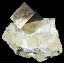 Pyrite - Fossils For Sale - #51231