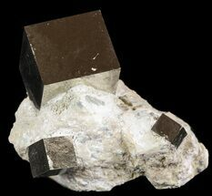 Four Pyrite Cubes In Matrix - Navajun, Spain For Sale, #51239