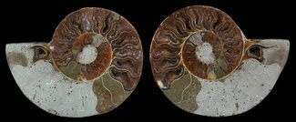 "Buy Bargain, 3.7"" Sliced Fossil Ammonite Pair - #51484"