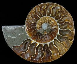 "4.1"" Polished Ammonite Fossil (Half) - Agatized For Sale, #51761"