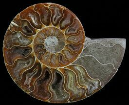 "Buy 4.6"" Polished Ammonite Fossil (Half) - Agatized - #51772"