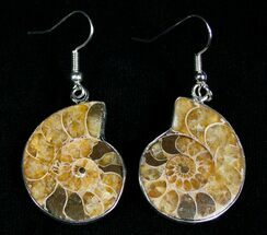 Buy Ammonite Earrings - #2713
