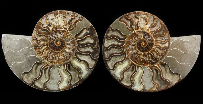 "8.4"" Cut & Polished Ammonite Pair - Agatized"
