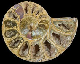 "3.3"" Sliced, Agatized Ammonite Fossil (Half) - Jurassic For Sale, #54017"