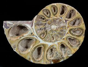 "Buy 3.25"" Sliced, Agatized Ammonite Fossil (Half) - Jurassic - #54028"