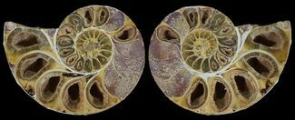 "Buy 3.55"" Cut & Polished, Agatized Ammonite Fossil - Jurassic - #53827"
