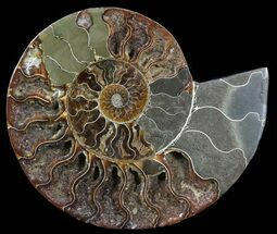 "5.8"" Cut Ammonite Fossil (Half) - Agatized For Sale, #54347"