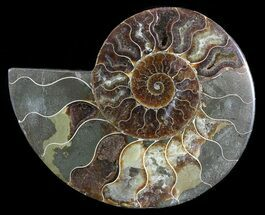 "Buy 6.3"" Cut Ammonite Fossil (Half) - Agatized - #54361"