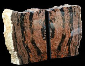 "Buy 6.6"" Tall Arizona Petrified Wood Bookends - #55501"