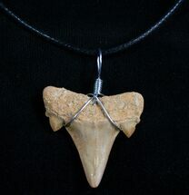 Buy Fossil Otodus Shark Tooth Necklace - #4954