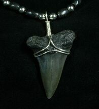 Fossil Mako Shark Tooth Necklace For Sale, #4967