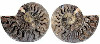 "4.6"" Split Black/Orange Ammonite Pair - Unusual Coloration For Sale, #55613"