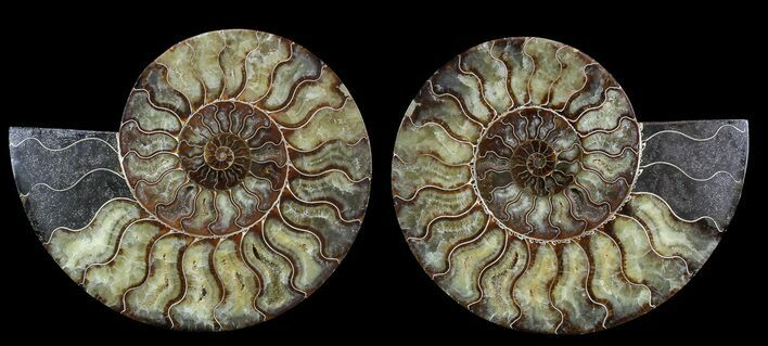 "Large, 9.3"" Polished Ammonite Pair - Agatized"