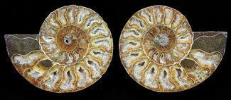 "Buy 3"" Polished Ammonite Pair - Agatized - #56290"