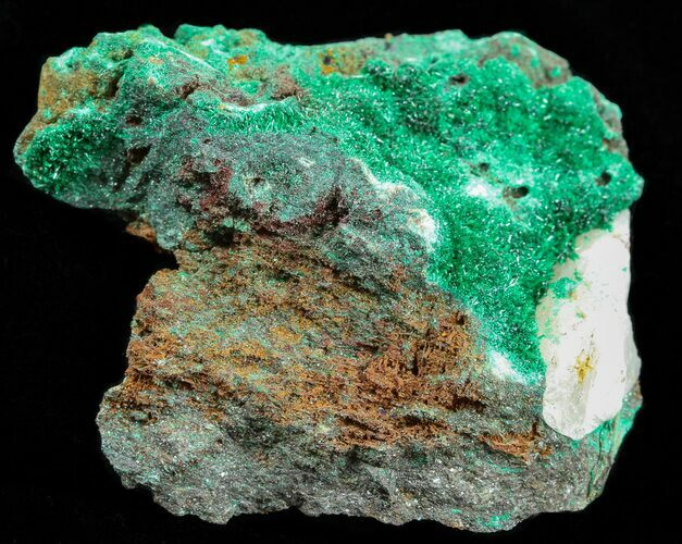 "2.3"" Malachite with Quartz - Morocco"