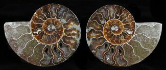 "5"" Cut & Polished Ammonite Pair - Agatized For Sale, #58715"