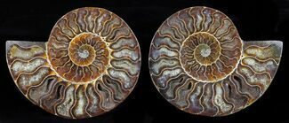 "5.3"" Cut & Polished Ammonite Pair - Agatized For Sale, #58721"