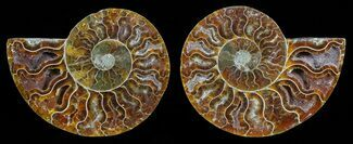 "3.7"" Polished Ammonite Pair - Agatized For Sale, #59438"