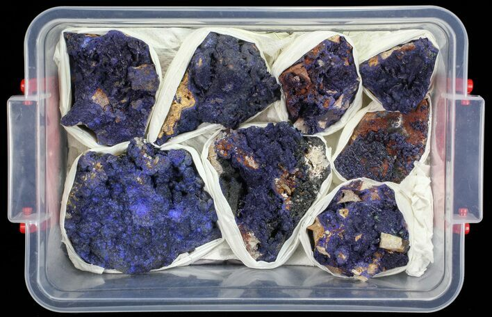 Vibrant Azurite From Morocco Wholesale Lot - 8 Specimens