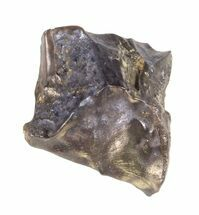 Triceratops horridus - Fossils For Sale - #60699