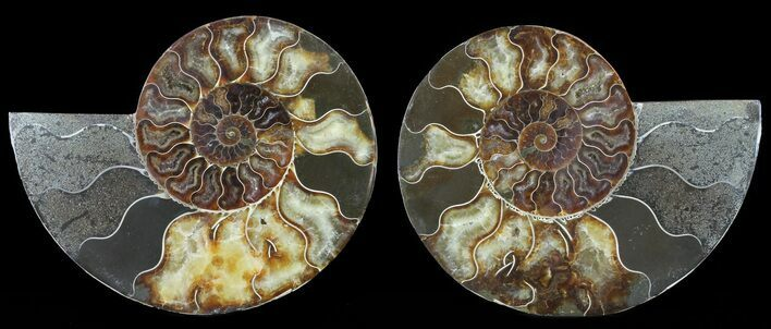 "6"" Cut & Polished Ammonite Pair - Agatized"