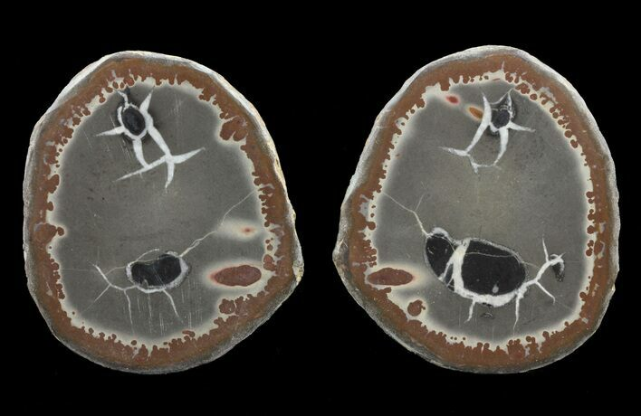 "2.4"" Cut/Polished Septarian Nodule Pair - Morocco"