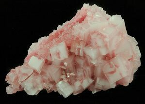 "Buy 3.5"" Pink Halite Crystal Plate - Trona, California - #61054"