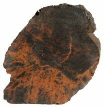 "Buy 3.9"" Mahogany Obsidian Slice - Oregon - #61243"