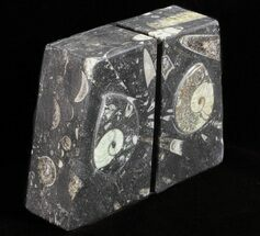 "Buy 4.7"" Polished Orthoceras and Goniatite Bookends - Morocco - #61330"