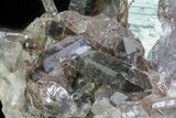 "9.8"" Dark Smoky Quartz Cluster - Large Crystals  - #60925-6"
