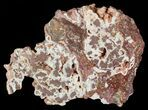 "5"" Polished Copper Ore Slab - Northern Australia - #63095-1"