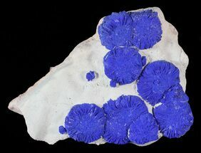 Azurite - Fossils For Sale - #63216