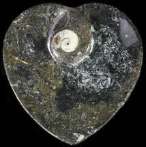 "Buy 4.5"" Heart Shaped Fossil Goniatite Dish - #61258"