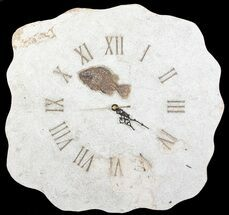"Buy 16"" Tall Clock With Cockerellites Fish Fossil - Wyoming - #64210"