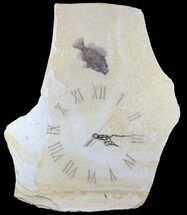 "Buy 23"" Tall Clock With Cockerellites Fish Fossil - Wyoming - #64216"