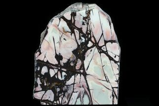 "Buy 9.3"" Polished Outback Jasper Section - Western Australia - #64789"