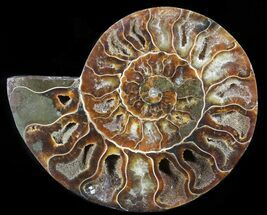"4.6"" Polished Ammonite Fossil (Half) - Agatized For Sale, #65006"