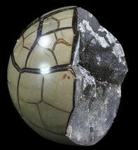 "Buy Bargain, 5.3"" Septarian ""Dragon Egg"" Geode - Black Crystals - #64825"