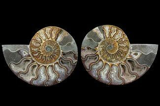 "4.8"" Cut & Polished Ammonite Pair - Agatized For Sale, #64964"