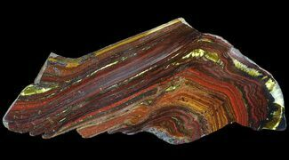 "3.9"" Polished Tiger Iron Stromatolite - (2.7 Billion Years) For Sale, #65537"