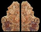 "9.5"" Tall, Colorful, Arizona Petrified Wood Bookends - #65961-1"