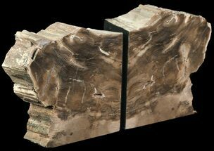 "Buy 5.5"" Petrified Wood Bookends - Oregon - #65968"