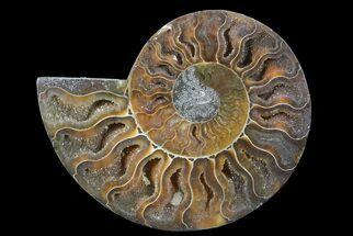 "Buy 4.2"" Polished Ammonite Fossil (Half) - Agatized - #64990"