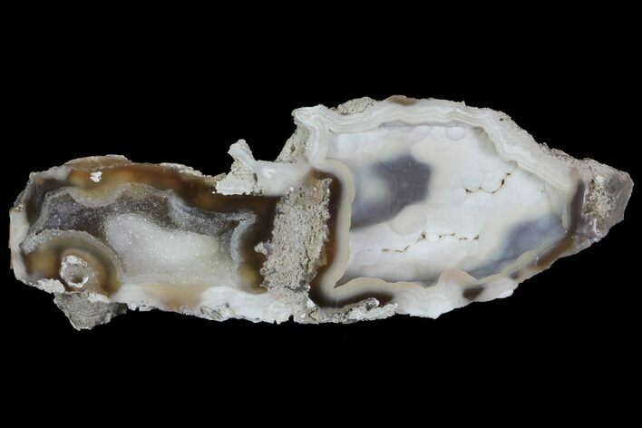 "6.2"" Agatized Fossil Coral Geode With Druzy Quartz - Florida"