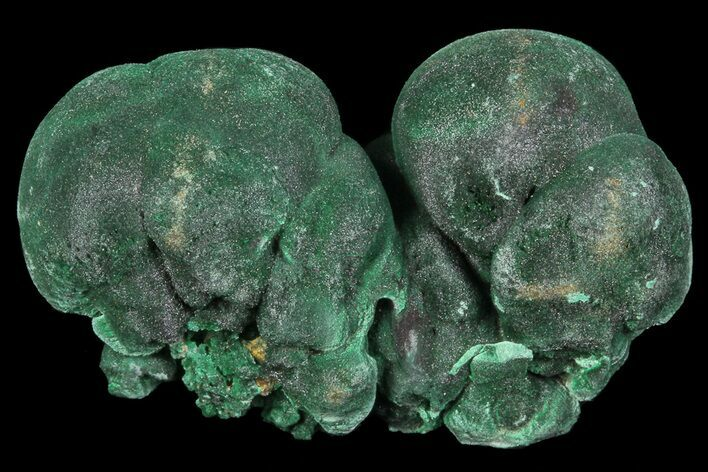 "Silky, 1.2"" Botryoidal Malachite Crystal Formation - Congo"