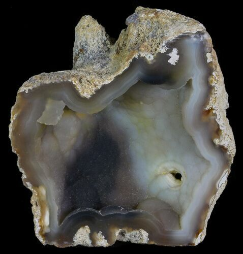 "3.6"" Unique, Agatized Fossil Coral Geode - Florida"