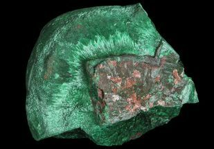 "Buy 1.3"" Fibrous Malachite Formation - Congo - #67453"